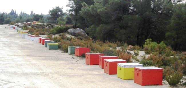 Μελισσοπαραγωγοί στην Χαλκιδική: Κυψέλες.